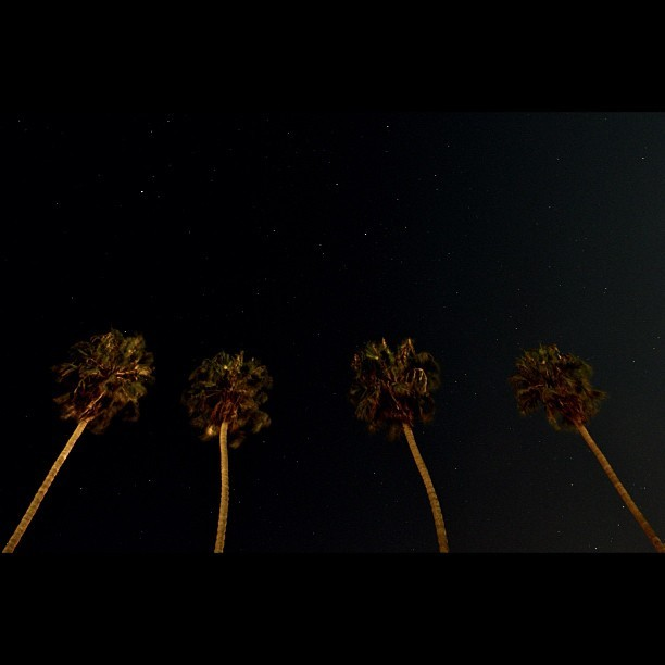 #palm #tree #sky #star #night #space #universe #light #picoftheday #pickoftheday #photooftheday  (Taken with Instagram at La Jolla Cove)