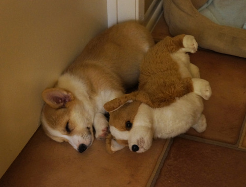 spooning buddies Submitted by corgnelius