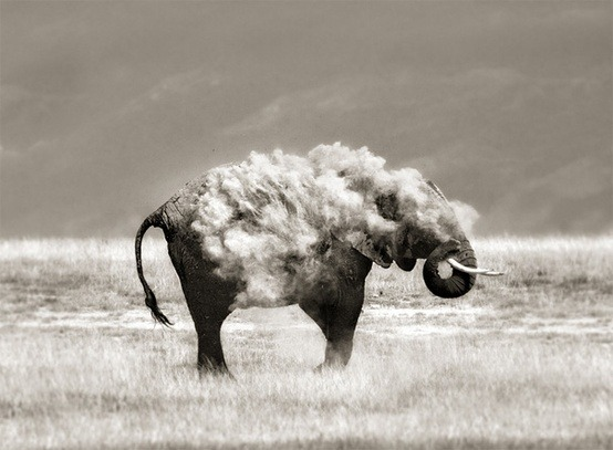 earthlynation:  dust bath source