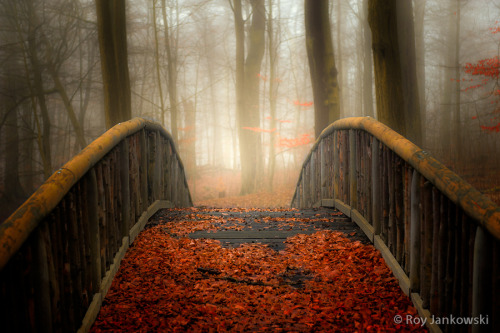 lori-rocks:  Welcome Autumn by Roy Jankowski