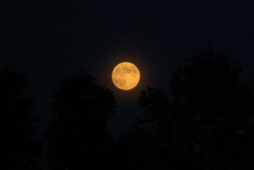 redundant-recluse:  The Harvest Moon on the rise.