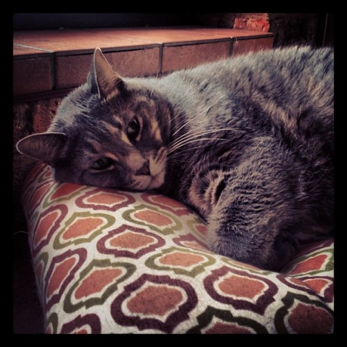 jasmined:  nap time for Cowboy #cat (Taken with Instagram)  I love that Jasmine tumbles my cats when she housesits.