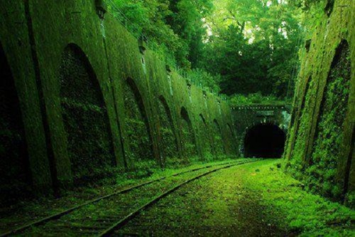 astralsilence:  abandonedporn:  Abandoned railroad - France  This tumblr will become my new favorite. I am fascinated by abandoned buildings/things,  there were times when I couldn't pass by one without trying to get in.