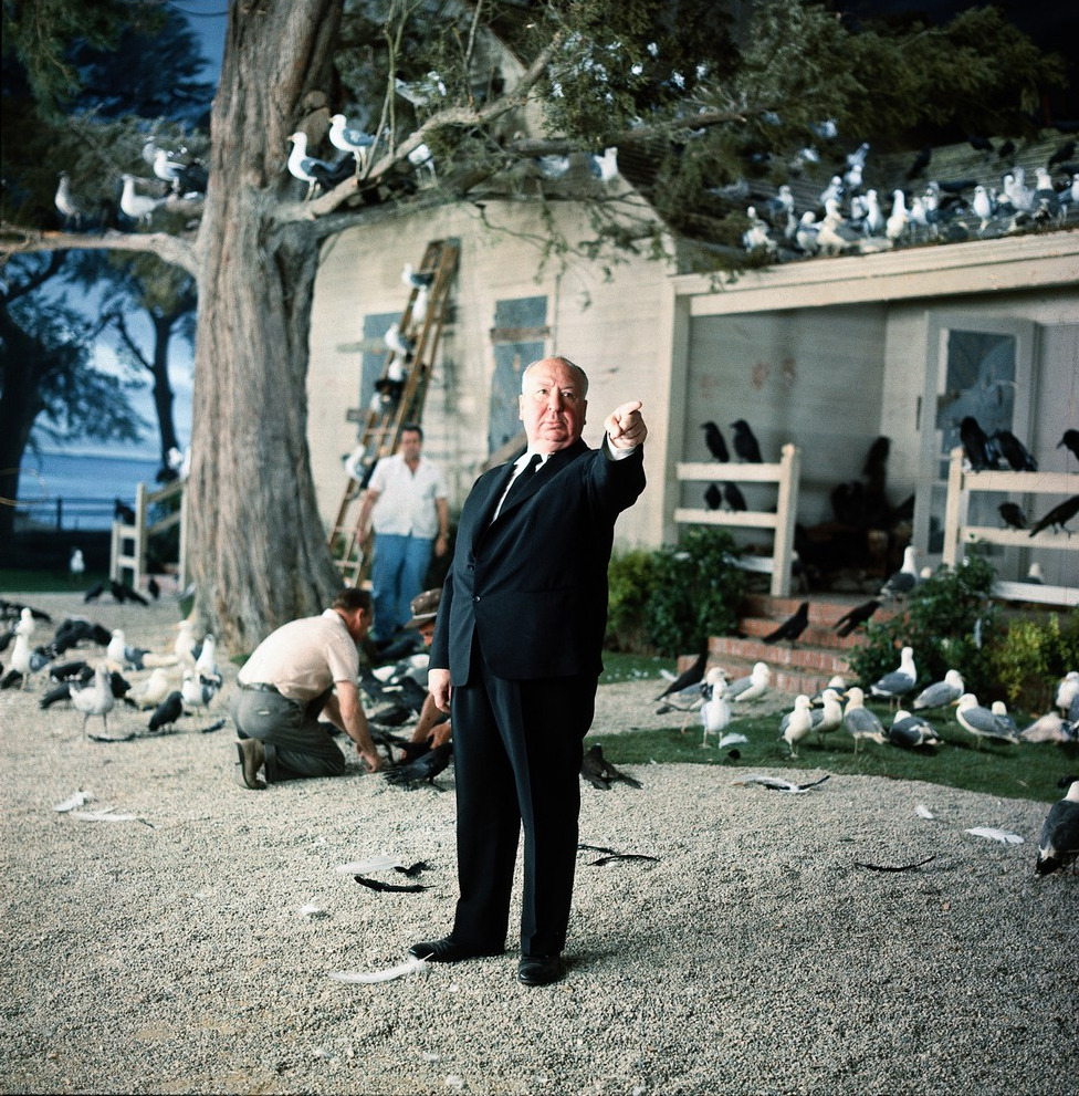 pickledelephant:  Alfred Hitchcock on the set of The Birds (1963)  All the essential documentaries on Alfred Hitchcock, including Hitchcock: Shadow of a Genius (1999), The Men Who Made the Movies: Alfred Hitchcock (1973), Reputations: Alfred Hitchcock (1999), In the Master's Shadow: Hitchcock's Legacy (2008), Paul Merton Looks at Alfred Hitchcock (2009), American Masters: Hitchcock, Selznick and the End of Hollywood (1999), Alfred Hitchcock Directs 'Frenzy' in 1972, Hitchcock: Alfred the Great (1994), Alfred Hitchcock - Masters of Cinema (Complete Interview in 1972), and A Talk with Hitchcock (1964).