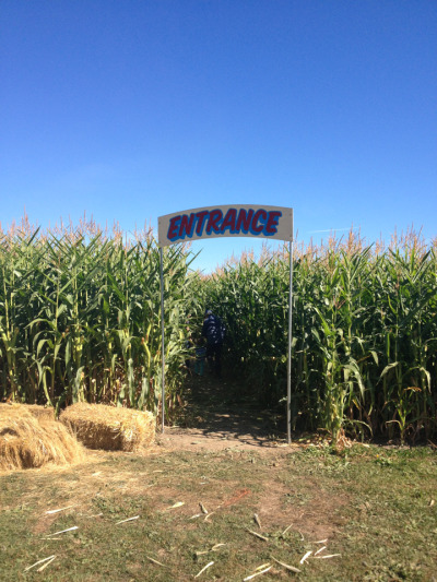 sixohthree:  Entering the corn maze! Send help if I'm not out by dark.