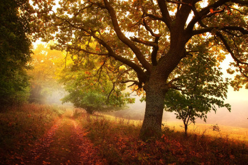 despicablealexis:  -Meditation of autumn- by Janek-Sedlar