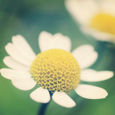 #flower #garden #nature #closeup (Taken with Instagram)