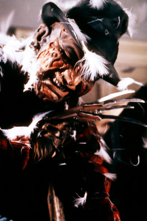 Freddy meets Feathers