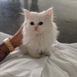 leopardpinkx:  hkangela:  this kitty look so fab   This cat omfg