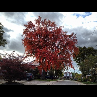 My favourite tree is Stratford.  (Taken with Instagram at Duke St. )