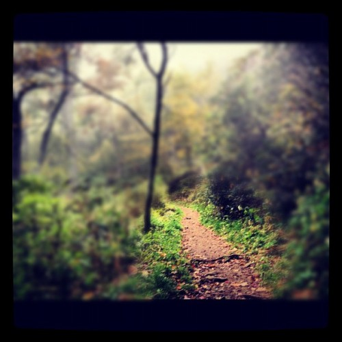 Mt. Pisgah Foggy Trail. #avlout #fall  (Taken with Instagram)