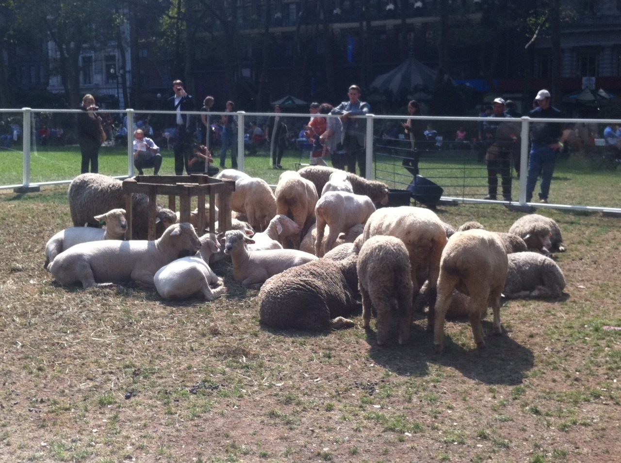 Sheeply Chic!  This past week Bryant Park was taken over by what else, SHEEP! In an effort bring more awareness to The Campaign For Wool, Gensler provided creative support for the Wool Uncovered event. Aside from education and a fascinating fountain installation it provided a great alternative to the typical lunch break! ~amberlee