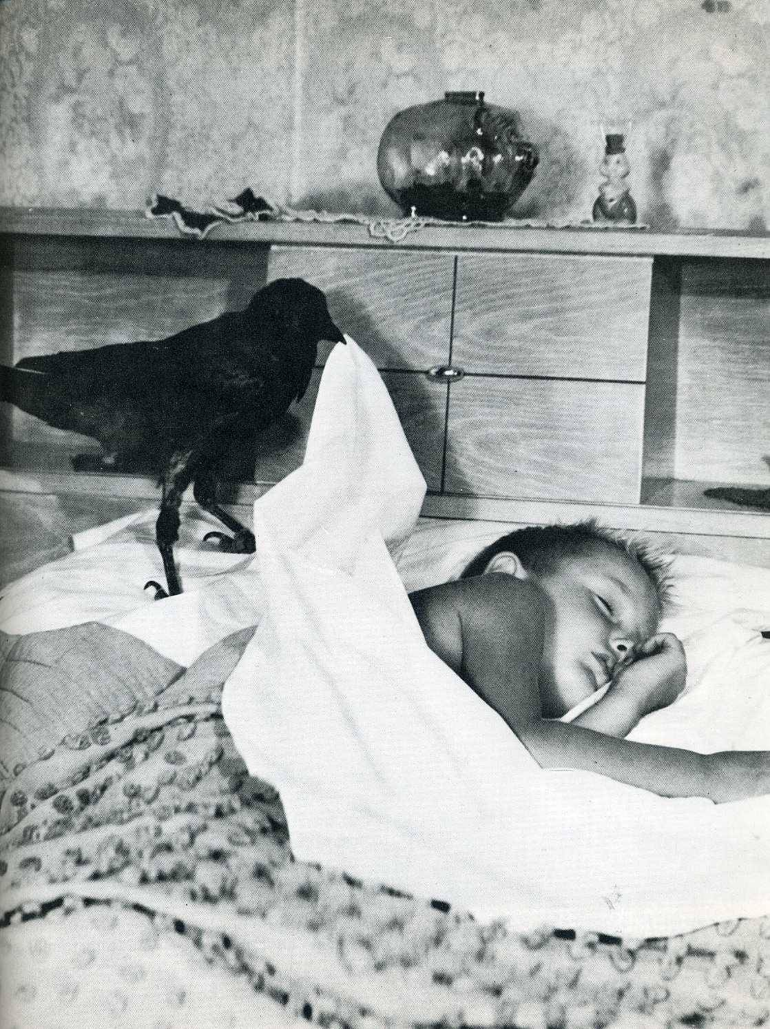 blackandwtf:  Date unknown A crow tucks a little boy into bed. (via submission)