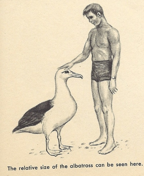 f-f-f-fight:  Everyone needs to know the relative size of an albatross.  So, the albatross is approximately penis height is what I'm seeing here.