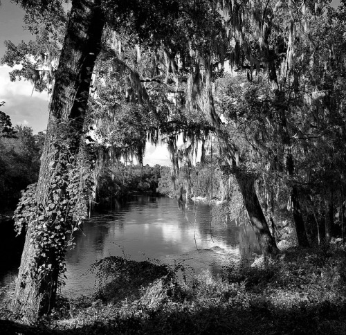 oldflorida:  My Florida-Suwannee River (via terrylmase on Flickr)