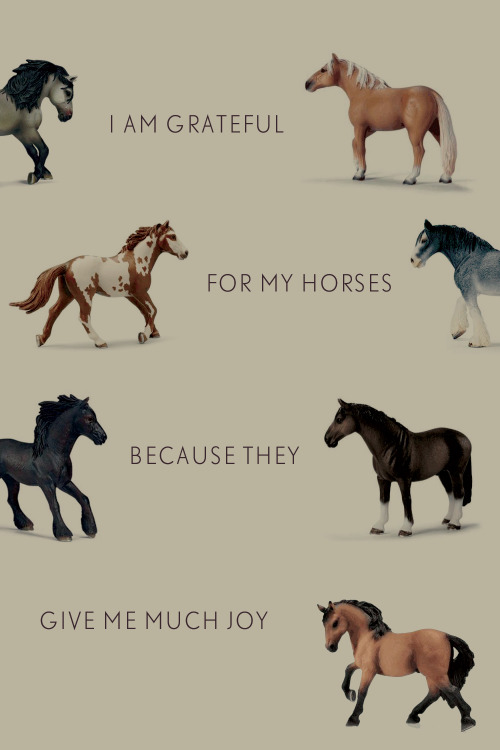 I am grateful for my horses because they give me much joy