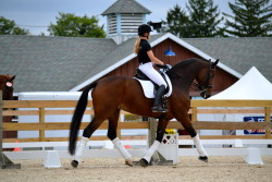lead-change:  Dressage at Devon fall '12