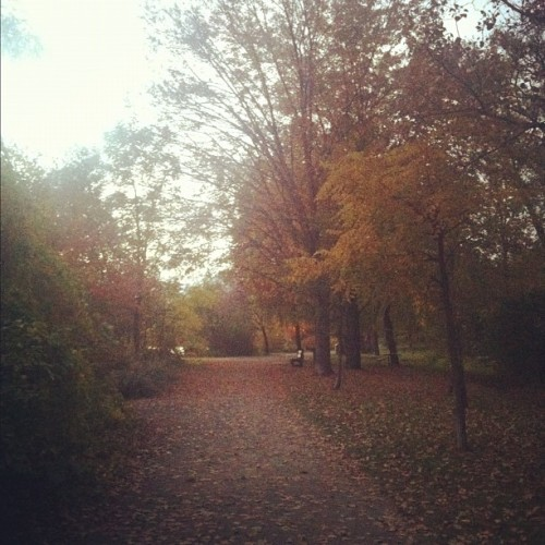 Autumn Walks 🍁🍂 #nofilter #iphoto #iphone4 #instagood #instagramer #fall #autumn #personal #instamood #instashot #trees #nature #pretty #leaves #unionville #outside #outdoors #seasons #sun #sunshine #sunrays #sky #bench #path #walk #naturelove #love  (Taken with Instagram)