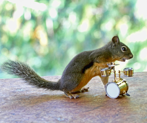 llbwwb:  In the Band (by Peggy Collins)  I need to put out props for our squirrels. we have tree stumps so they look like they're in nature, but I really want something silly like this