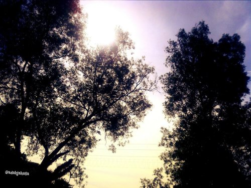 One of my best shoot of the trees. Err using my friend's camera of course. I don't  have my own camera. But the copyright of this picture is still belong to me right? LOL