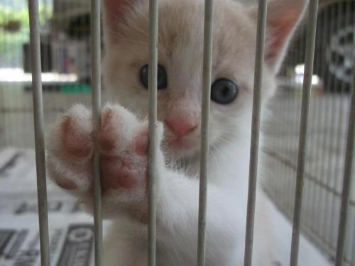 Cat in prison. Poor you.