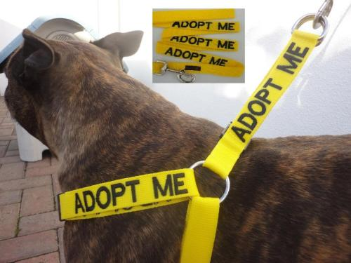 hopefulveterinarian:  Excellent alternative to the yellow ribbon concept. Check them out here: Friendly Dog Collars