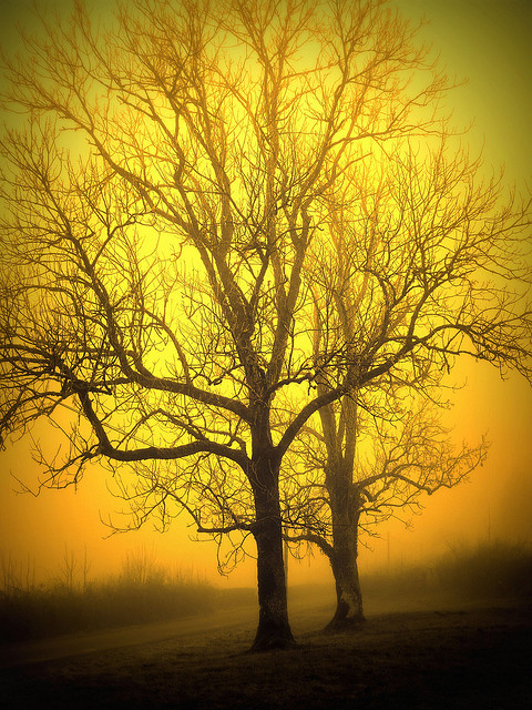 027 Trees in the fog by I Am Not I on Flickr.