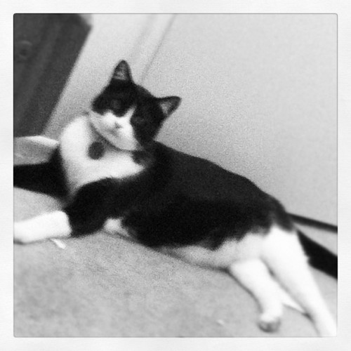 He's keeping an eye on me #lol #mybabylove #kitty #blackandwhite #ishouldbestudying #allnighter #cantstopwontstop (Taken with Instagram)
