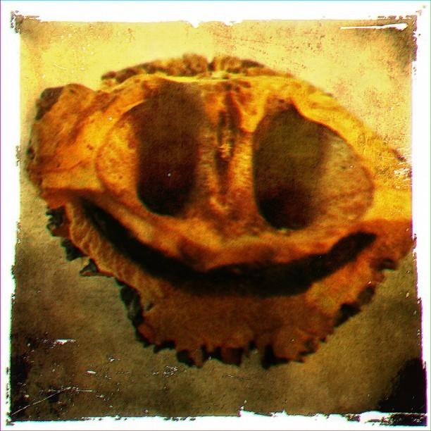 The #happy #nut. #wild #walnut to be precise.  (Taken with Instagram)