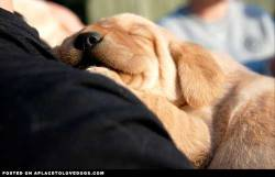 aplacetolovedogs:  photobucket Little Hondo sleeping