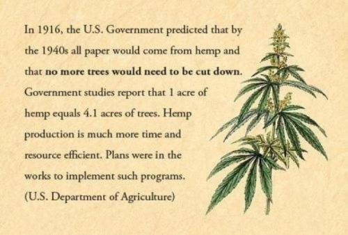 I'm not exactly down for the whole weed smoking business, but if hemp can help our world and the trees that help us breathe I'm defiantly down for that!