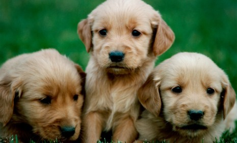 theweekmagazine:  A new study suggest looking at pictures of cute things (puppies, for example) may improve concentration. The study's authors think incorporating cute imagery into our everyday professional routines could make people more careful and deliberate in their work.  As if we needed another reason to post cute animal pictures.