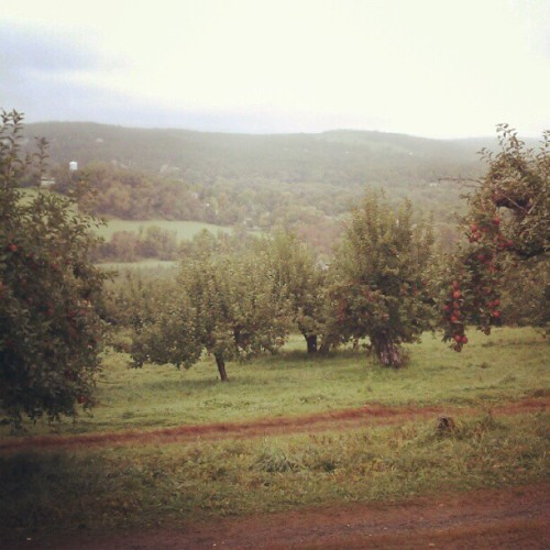 Fall foliage and apple picking in Upstate #NY (Taken with Instagram)
