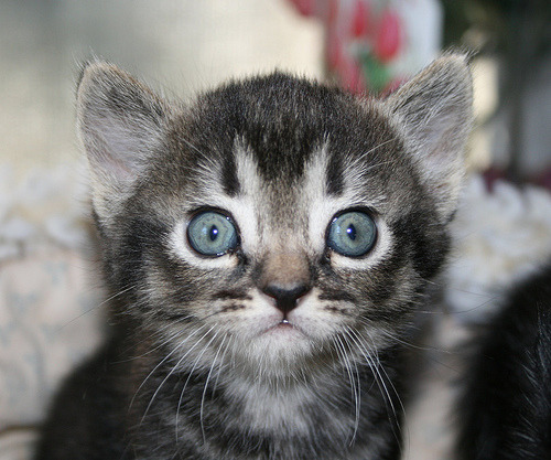 Study: Stupid Photos of Adorable Cats Boost Workplace Productivity lolwhut.