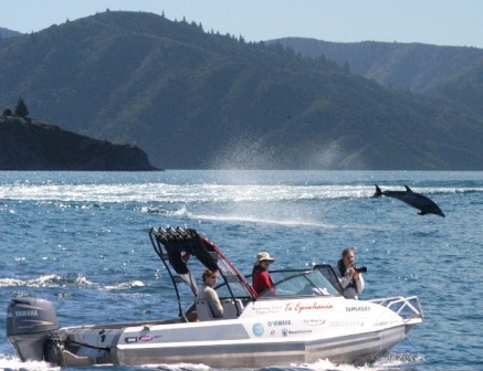 Spend 3 Months Studying Bottlenose Dolphins Off New Zealand Volunteers required for a Bottlenose Dolphin Study [from 1st December 2012; Northland, New Zealand] As of December 2012, a new PhD study will assess the behavioural ecology and conservation of bottlenose dolphins (Tursiops truncatus) in the Bay of Islands, Northland, New Zealand. The field season will run year round and the first vacancy for volunteers is from December 1 2012. A minimum commitment of 3 months is preferred, with priority given to those who can commit to longer.  Interested? Click here for more info.