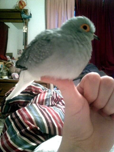 boypart:  thumbs up for bird