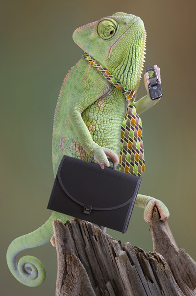lizardsenjoyinglife:  this lizard enjoys looking business-like.