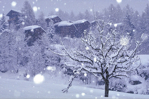 icy-winterland:  ❅ In my winter wonderland ❅