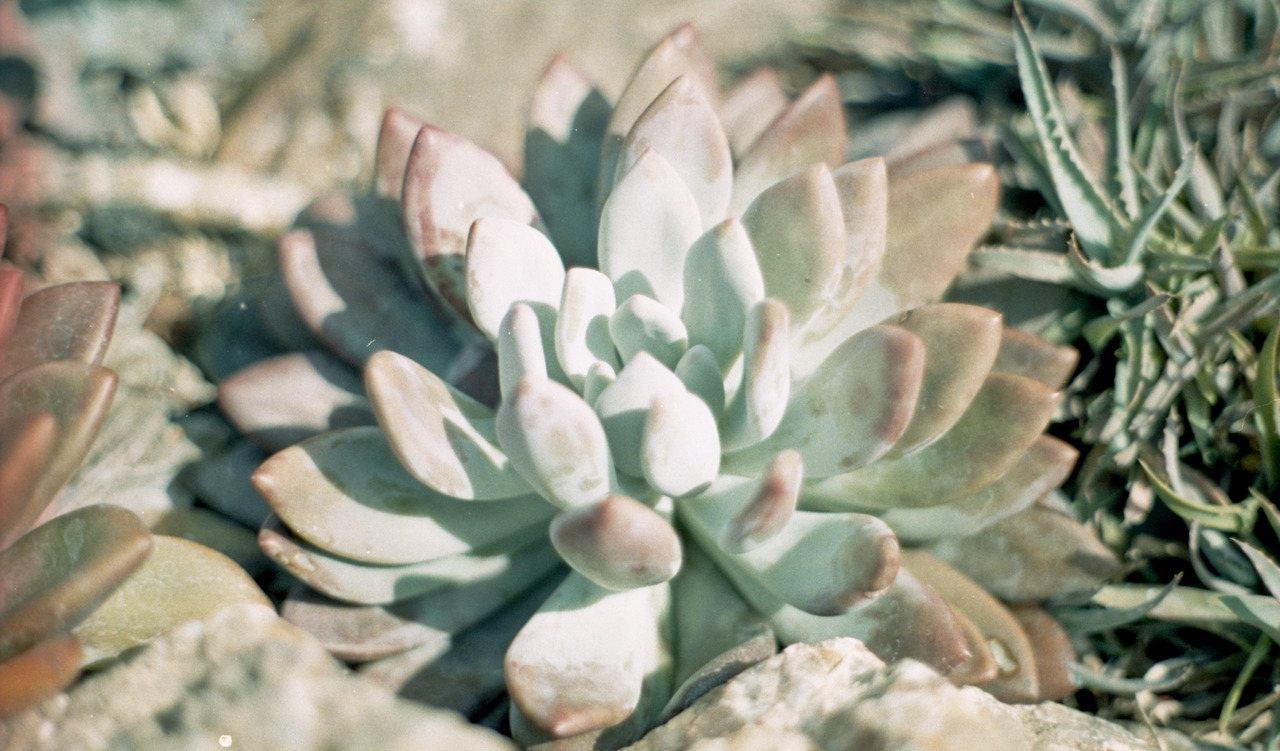 "Buy the 4x6"" Print of Desert Flower"