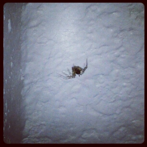 For no reason, I have allowed this spider live in my bathroom for over a week now. I call him Billy. #weird #gross #spider (Taken with Instagram)