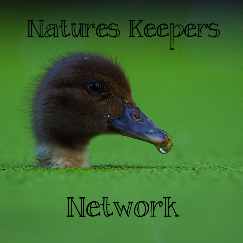 greenfrogz:  Hello! This is the Natures Keepers Network! If you are an animal or nature blog, then please apply for this network!  It's for all those with animal or nature blogs that want to find others and want to be a part of something!  I hope you apply, and look forward to seeing you on the network. To apply you need: To be an animal or nature blog. Be active. Be nice & polite :)  Reblog this post or message me here.  Put a link on your blog! And that's it! Thanks… :)