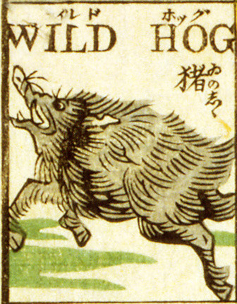 Wild Hog. Detail from a woodcut by Tsunajima Kamekichi (1887). Found here.