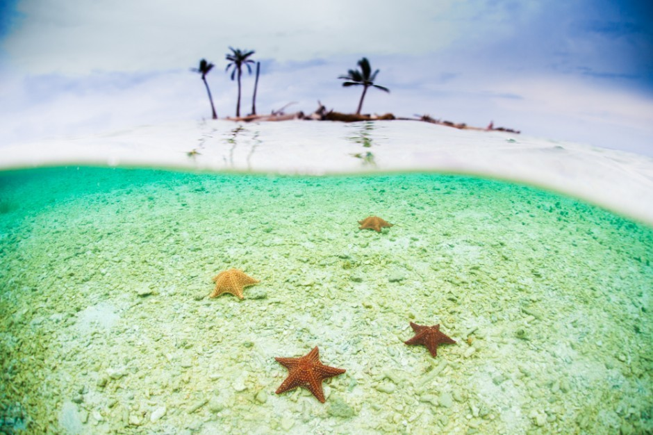 Starfish in the San Blas Islands, Panama.  Photo by Scott Sporleder, MatadorU faculty. —from 24 postcards from the San Blas Islands, Panama (See the rest of the gallery here)