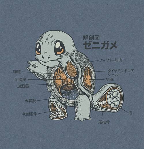 xombiedirge:  Squirtle Anatomy by Ryan Mauskopf / Website