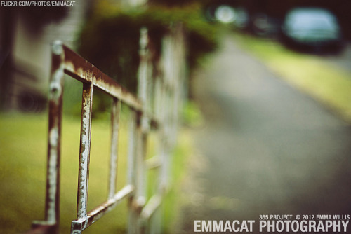 Metal Fence - 165/365 on Flickr.Via Flickr: Sorry I am late on editing and posting these, but I am still taking photos for this project every day! A rusted metal fence… I like it though.