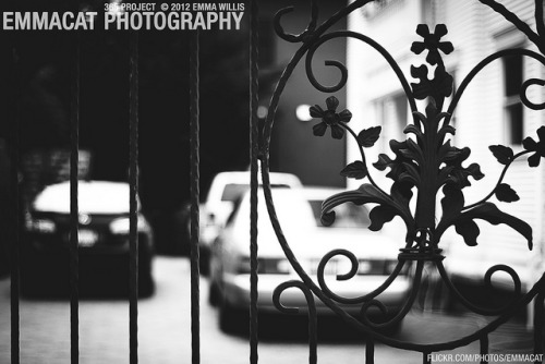Fancy Gate - 165/365 B&W on Flickr.Via Flickr: Sorry I am late on editing and posting these, but I am still taking photos for this project every day! A nice gate on someone's very nice home in Queen Anne…