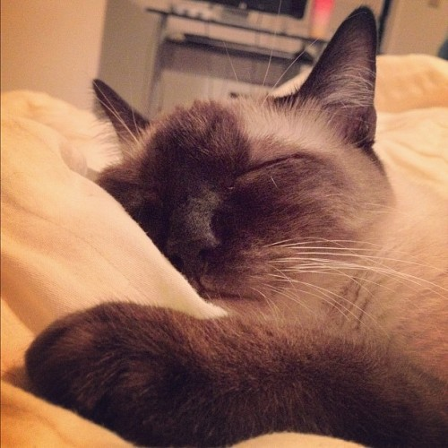 PHOTO OP: After Dinner Nap Via xiao_h.