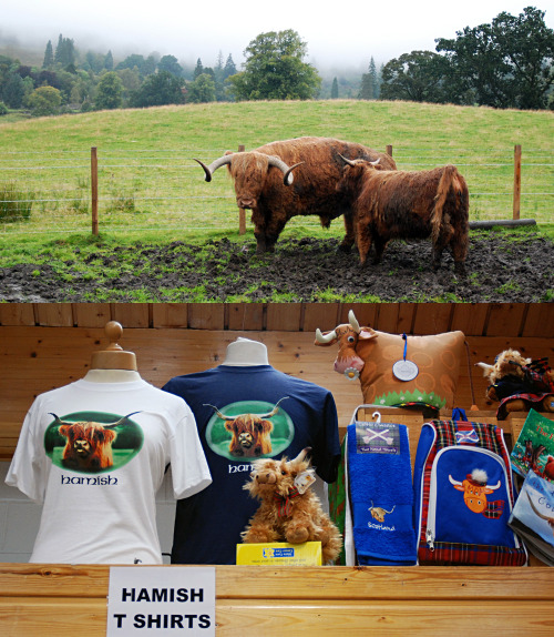 leemeredith:  Hamish is to Kilmahog, Scotland as Li'l Sebastian is to Pawnee, Indiana.