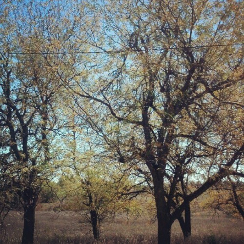 #day2 #fallleaves just turning! (Taken with Instagram)