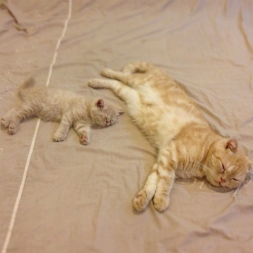 PHOTO OP: Like Father, Like Son Via tungtang_thecat.